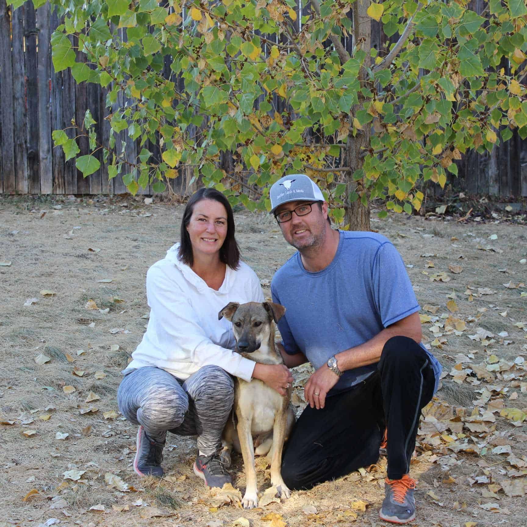 Adoption: Dharamsala Animal Rescue