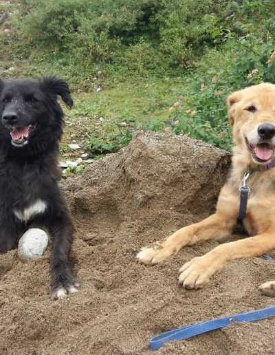 Kalu and Sandy dirt pile