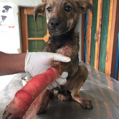 Street Animal Rescue Program