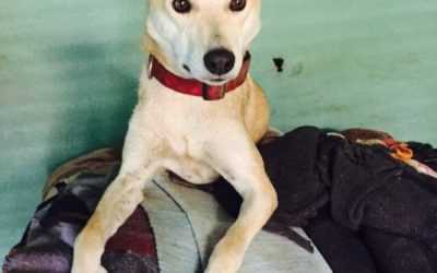Asha has been Adopted: Donate Now to Help her Get Home