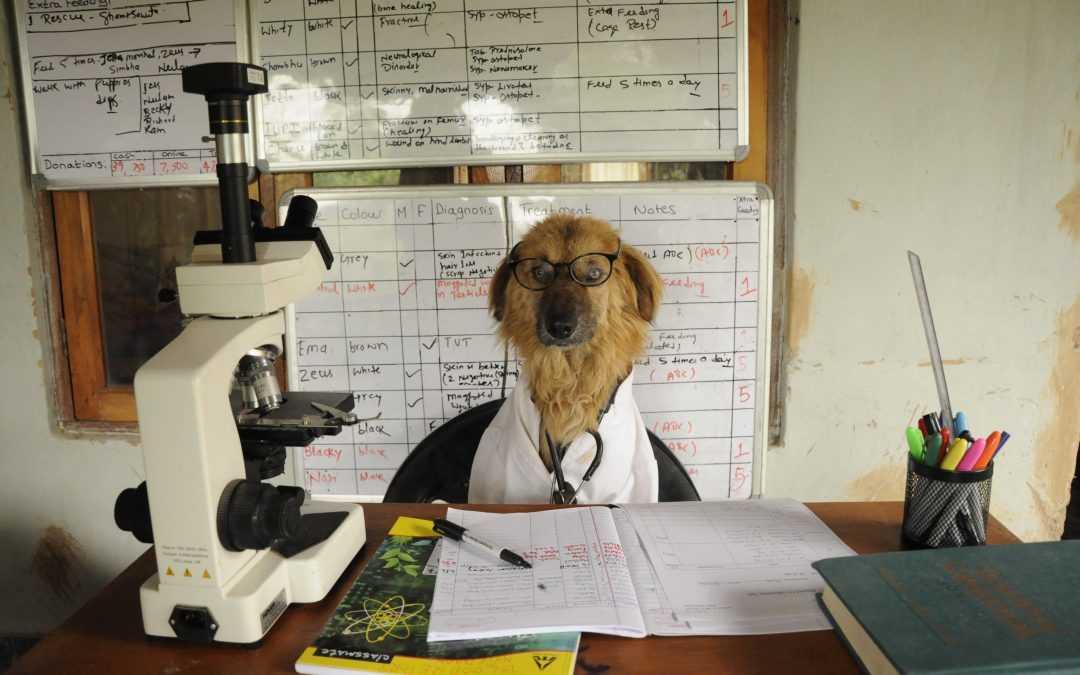 Meet Suraj: Just a dog lookin' for Love.