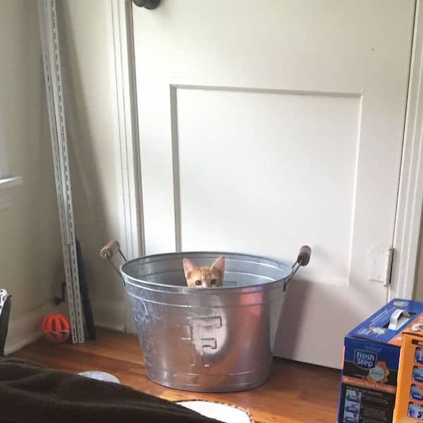 kitty in a bucket
