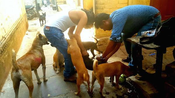 tourist watches stray dog treatments