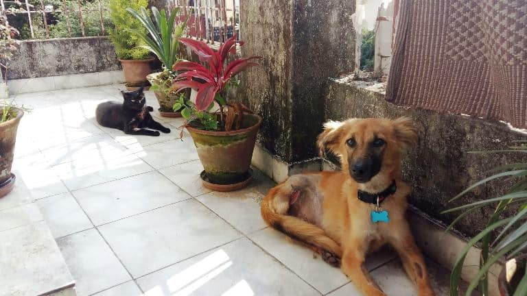 Cats, Dogs, and Living with Disablities