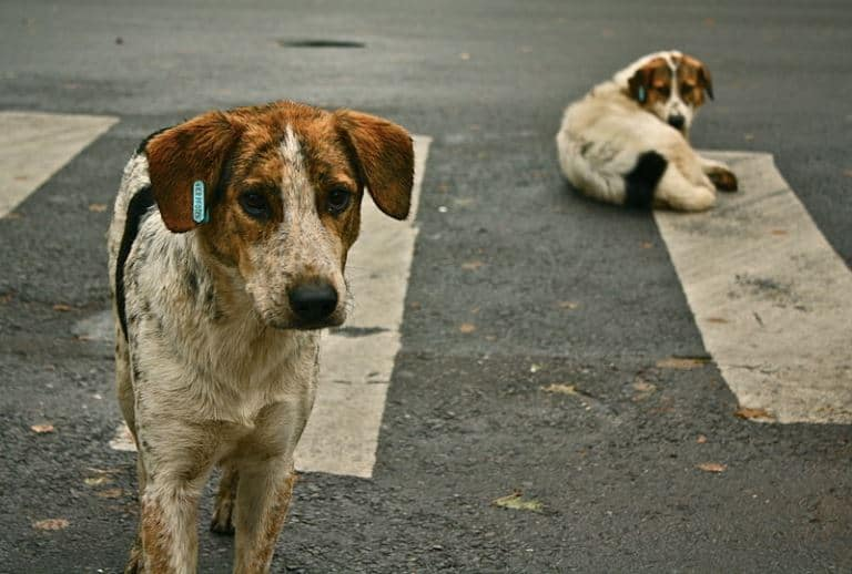 Animal Abandonment: It's just not Okay