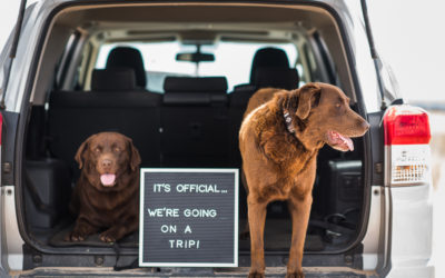 Road Trips with Dogs