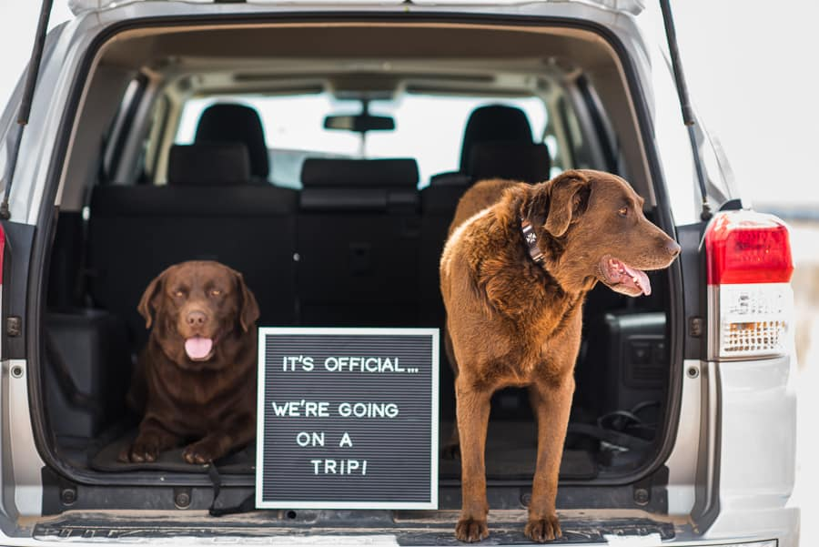 Eight Things to Make Road Trips with Dogs Easier