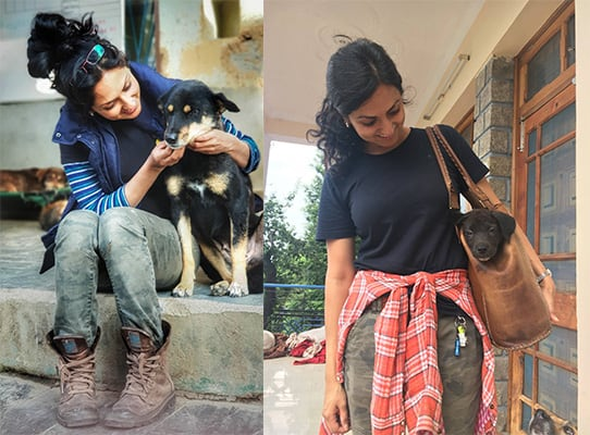 How suffering strays dogs inspired an Indian vet