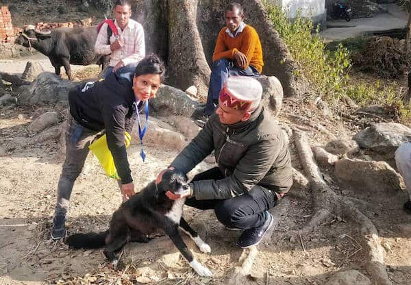 Press Release: Dharamsala Animal Rescue vaccinates 347 Homeless Dogs