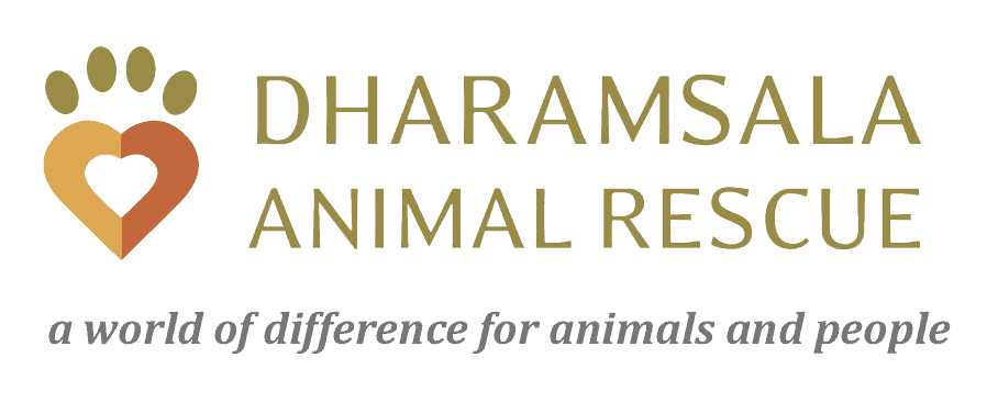 Dharamsala Animal Rescue