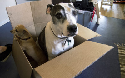 6 Tips On How To Prepare Your Pet For An Upcoming Move