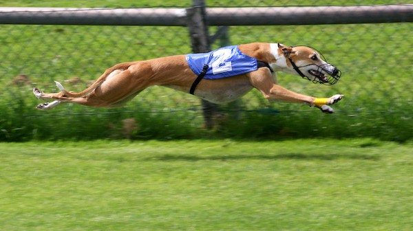 Dog Racing Died Without A Funeral