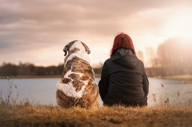 5 Holistic Approaches to Your Dog's Ailments