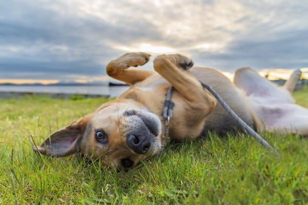 10 Facts About Dogs You May Not Know