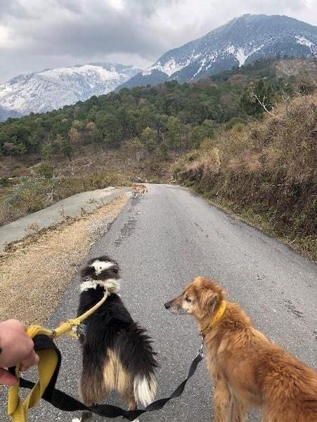 Volunteer at Dharamsala Animal Rescue