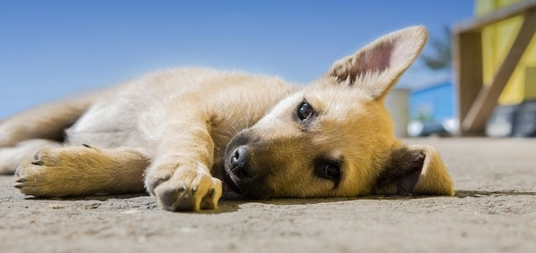7 Ways to help your Dog with CBD Oil