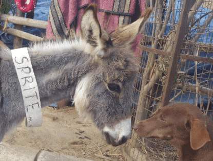 Beasts Of Burden Get A Home They Deserve