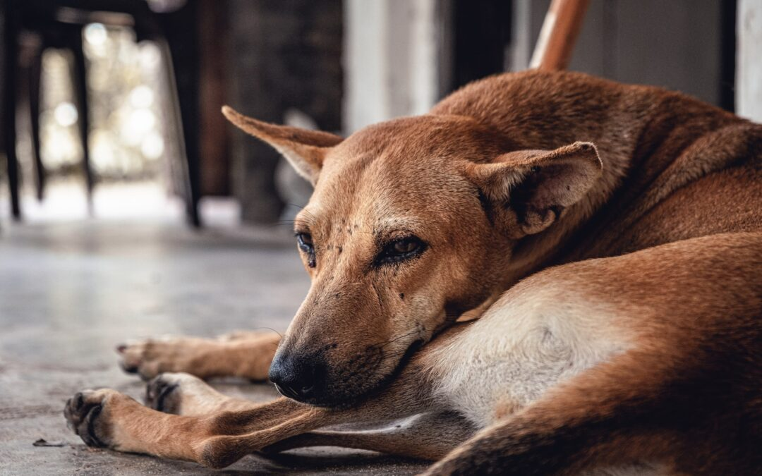 Feeling The Feelings – A Poem From The Heart Of An Anxious Dog