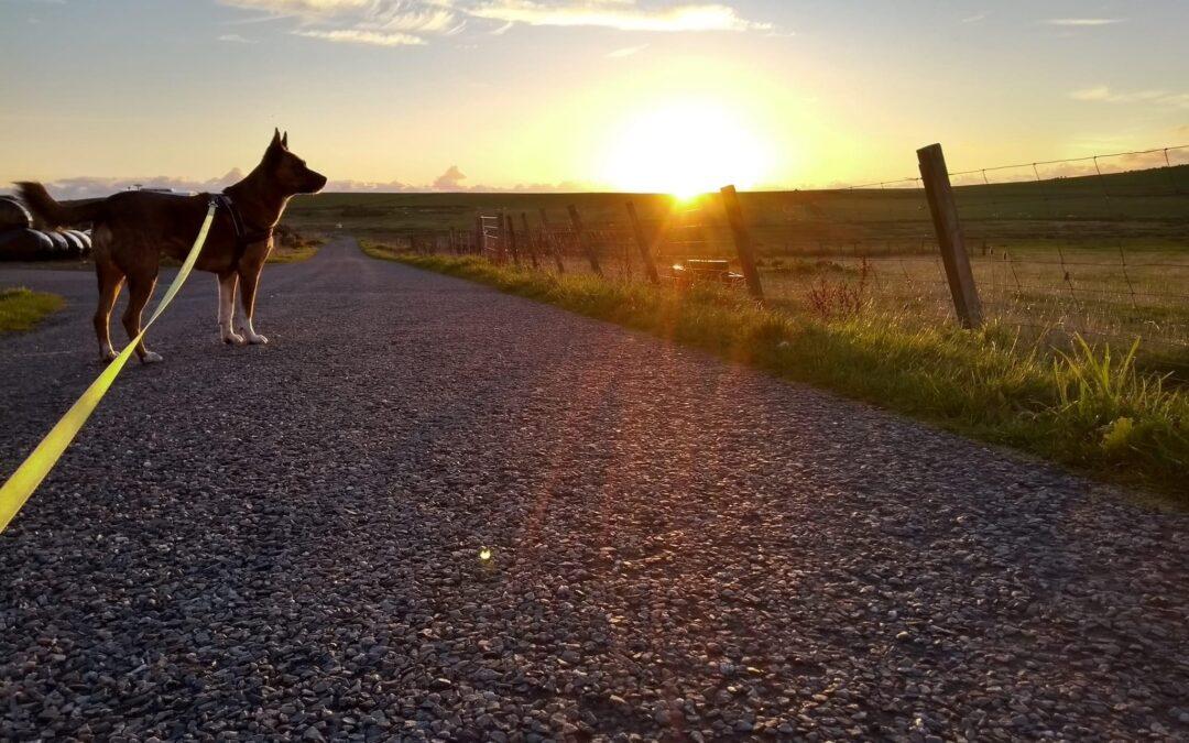 A Nomadic Life With My Desi Dog