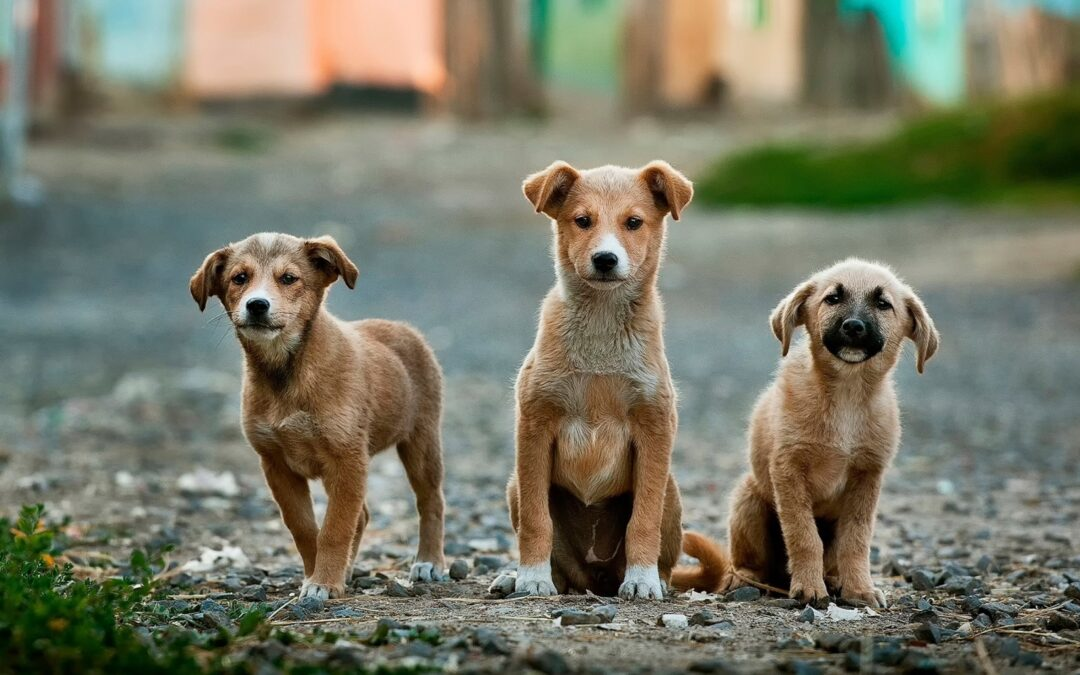 5 Promising Ways To Help Strengthen Your Pet's Immune System