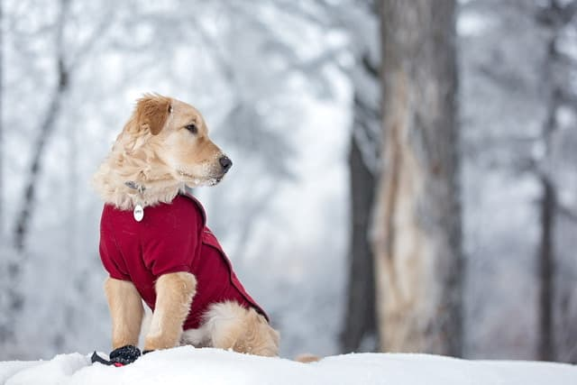 5 Common Reasons Owners Buy Their Pets Coats