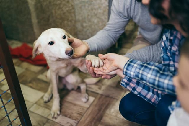 Health Tips For Your Newly Adopted Dog